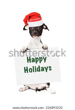 A cuteblack and white mixed breed puppy wearing a red santa hat with the words Merry Christmas  holding a Happy Holidays sign while looking at the camera. Isolated on a white background.  - stock photo