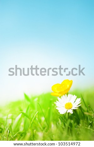 A daisy and a buttercup on grass in front of a blue sunny sky.