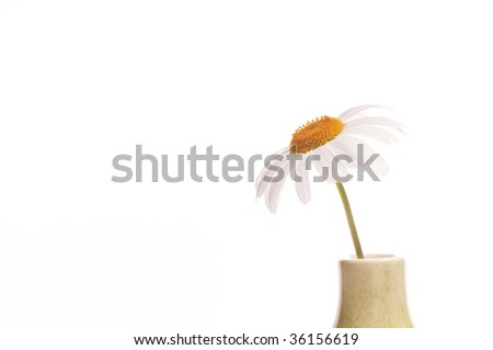 A daisy isolated on white background - stock photo