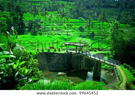 A Dam in Bali with beautiful scene of green paddy field. - stock photo