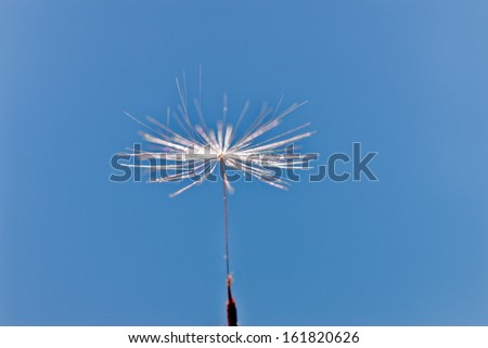 A dandelion seed floating through the sky. - stock photo