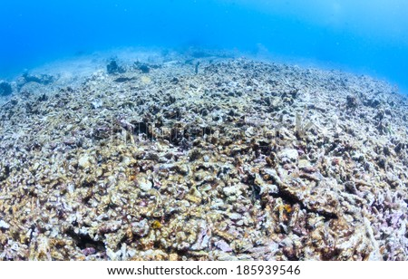 A dead coral reef.  Global warming, CO2 increase in the oceans, destructive fishing practices and natural events are destroying the worlds reef systems - stock photo