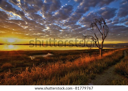 a dead tree along  a trail next to the marsh land - stock photo