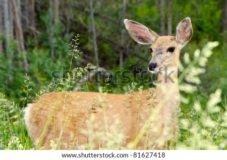 A deer over the forest background - stock photo