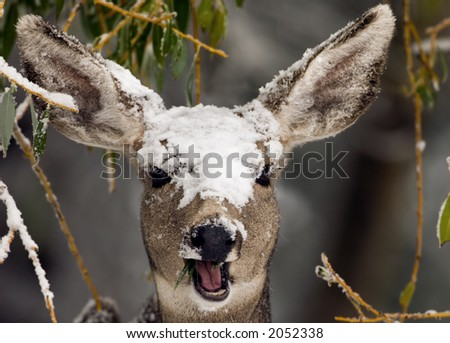 a deer with snow on its head