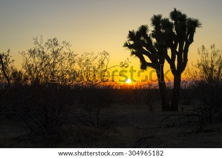 A desert sunset provides a backlit cactus. - stock photo