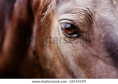 A detail of a horse eye - stock photo
