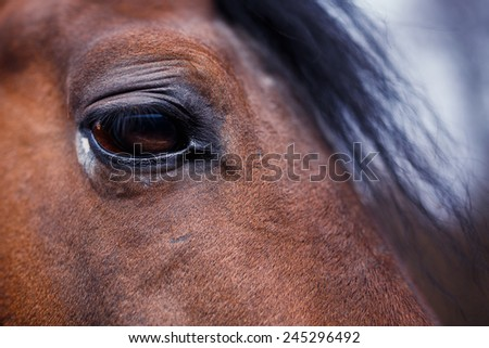 A detail of a horse eye at autumn time - stock photo