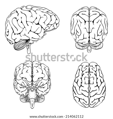 A diagram of a brain from the top side front and back in outline - stock photo