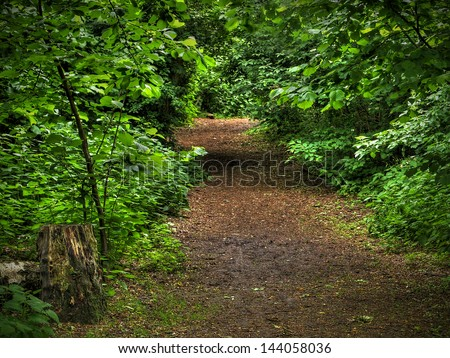 A dirt path surrounded by fresh green leaves and dappling light - stock photo