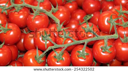 A Display of Freshly Harvested Red Vine Tomatoes. - stock photo