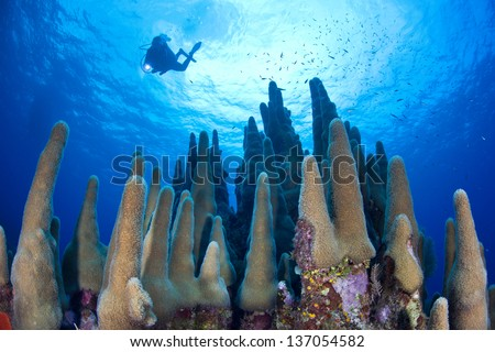 A diver explores a coral reef highlighted by reef-building corals off Grand Cayman in the Caribbean Sea. - stock photo