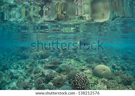 A diverse coral reef, growing in the shallows, fringes the island of Kri and the Dampier Strait in Raja Ampat, Indonesia.  This region is known for its exceptional marine biological diversity.