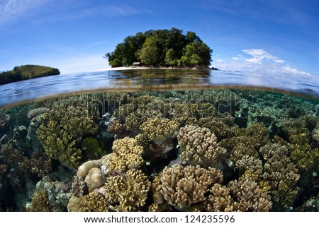 A diverse coral reef grows in shallow water near a set of islands in the Solomon Islands.  The Solomon Islands are part of the Coral Triangle, the most diverse area in the world for marine life. - stock photo