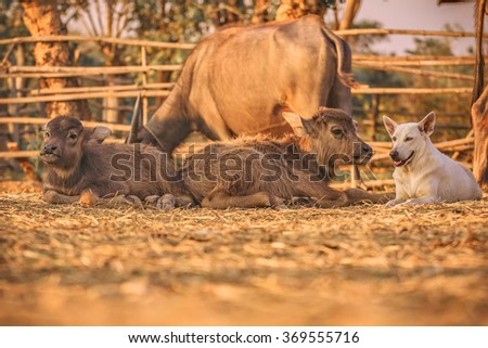 A dog and two calf - stock photo