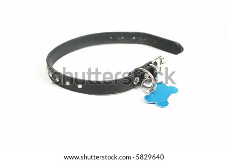 a dog collar with an id tag on it