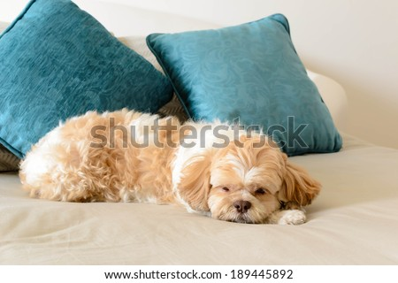 a dog has happy time on a big bed at the hotel - stock photo