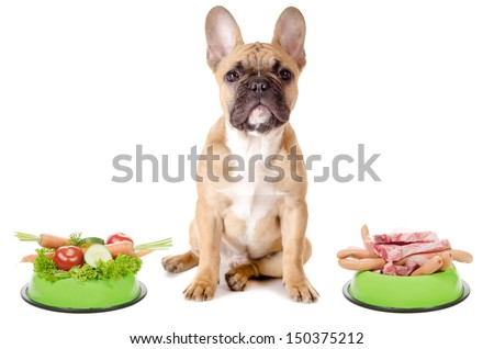 a dog has the choice between meat or vegetables before white background - stock photo