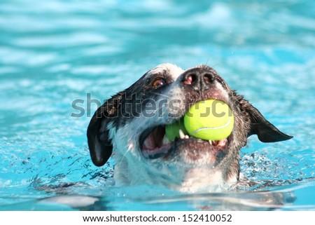 a dog having fun at a swimming pool - stock photo