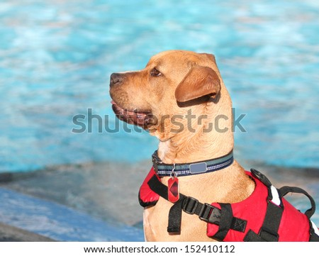 a dog having fun at a swimming pool - stock photo
