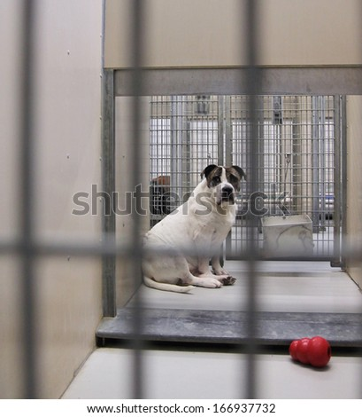 a dog in a local shelter - shot at high iso - stock photo