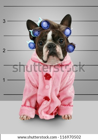 a dog in front of a convict poster getting a mug shot taken - stock photo