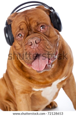 a dog in headphones is listening to the music. isolated on a white background