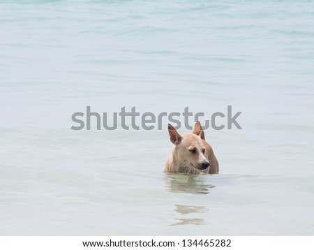 A dog in the sea - stock photo