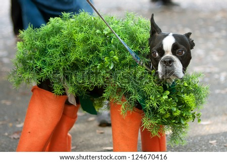 A dog is dressed in a chia pet costume for a Halloween dog costume contest. - stock photo