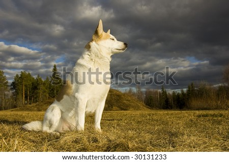 A dog is sitting and enjoying the sun whit closed eyes, in the background forest and dark clouds