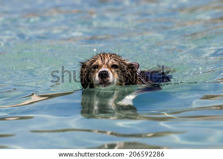 A dog is swimming  - stock photo
