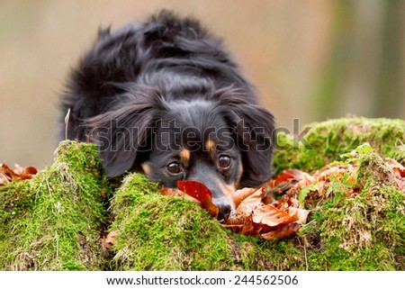 A dog lies on a small moss-covered hill and looks cute - stock photo