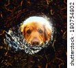 a dog looking down a hole in the ground with the sun shining behind  - stock photo