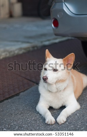 A dog looks on in Tokyo, Japan. - stock photo