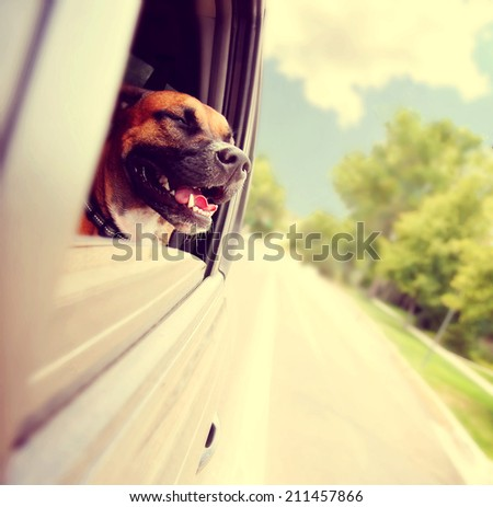 a dog out enjoying a card ride during summer toned with a retro vintage instagram filter  - stock photo