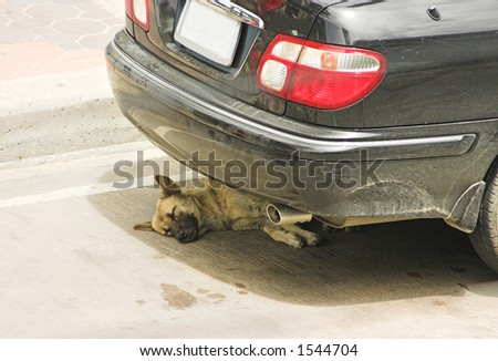 A dog resting under the car - stock photo