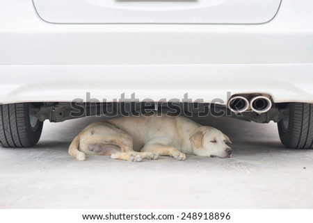 A dog resting under the car. - stock photo