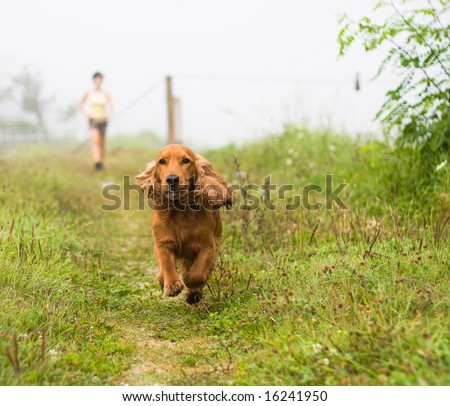 A dog running in a misty morning - stock photo