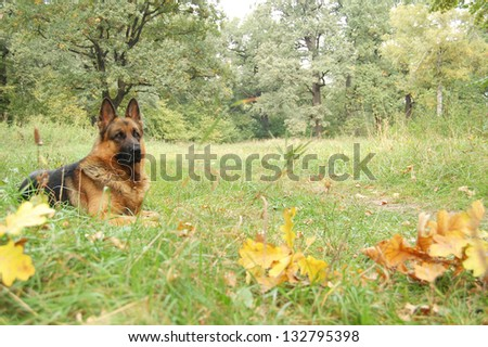 A dog silhouette in autumn forest.