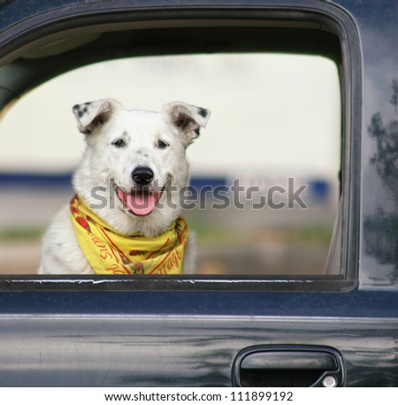 a dog sitting in a car waiting - stock photo