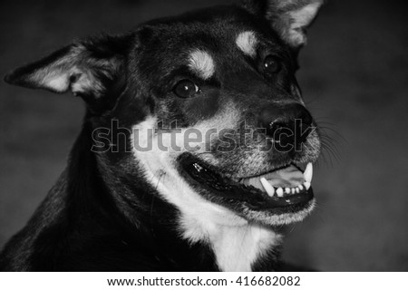 a dog smiling in dark light (black and white picture)