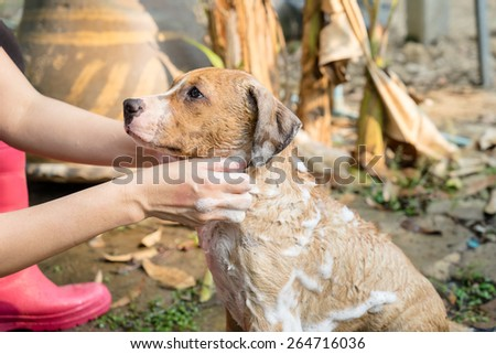 A dog taking a shower with soap - stock photo