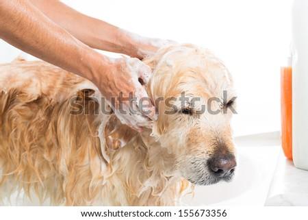 Cat Lick Soap