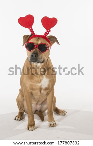 A dog wearing red heart-shaped head toppers and heart-shaped sunglasses (Valentine's dog)