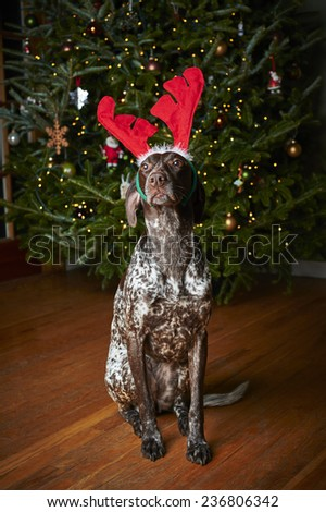 a dog wearing reindeer antlers - stock photo