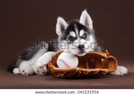 A dog with a baseball glove - stock photo