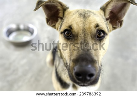 A dog with a food bowl in the background as he eagerly awaits his meal. - stock photo