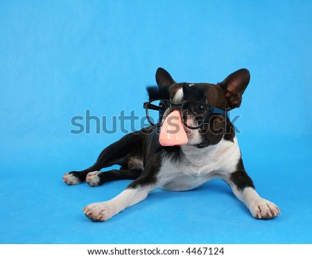 a dog with a groucho marx costume on - stock photo