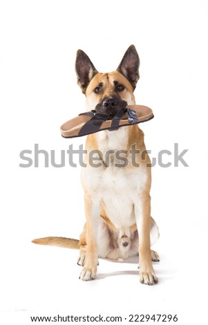 A dog with funny bunny ears on sitting on a white background