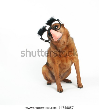 a dog with glasses and eyebrows on - stock photo